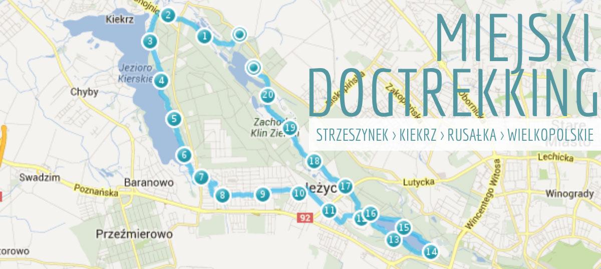 Spacer z psem w Poznaniu wzdłuż poznańskich jezior