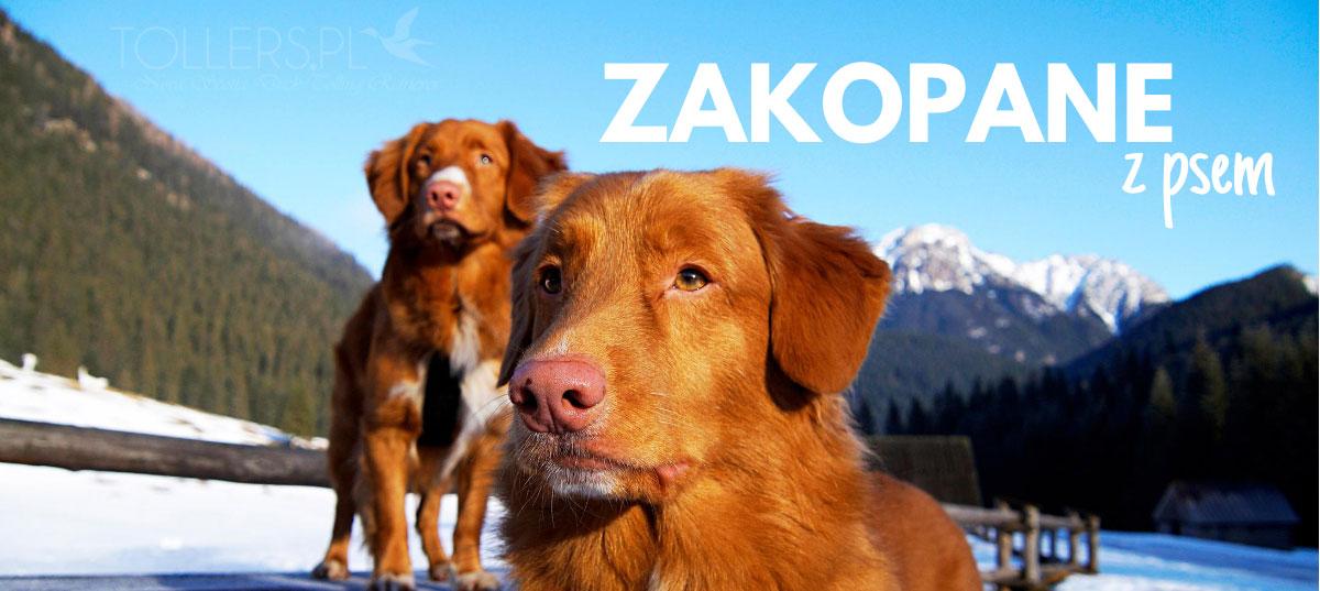 Zakopane i Tatry z psem
