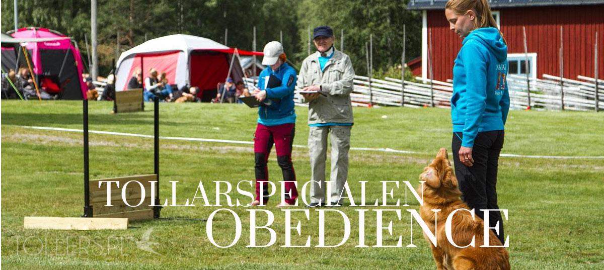 Obedience Tollarspecialen 2015