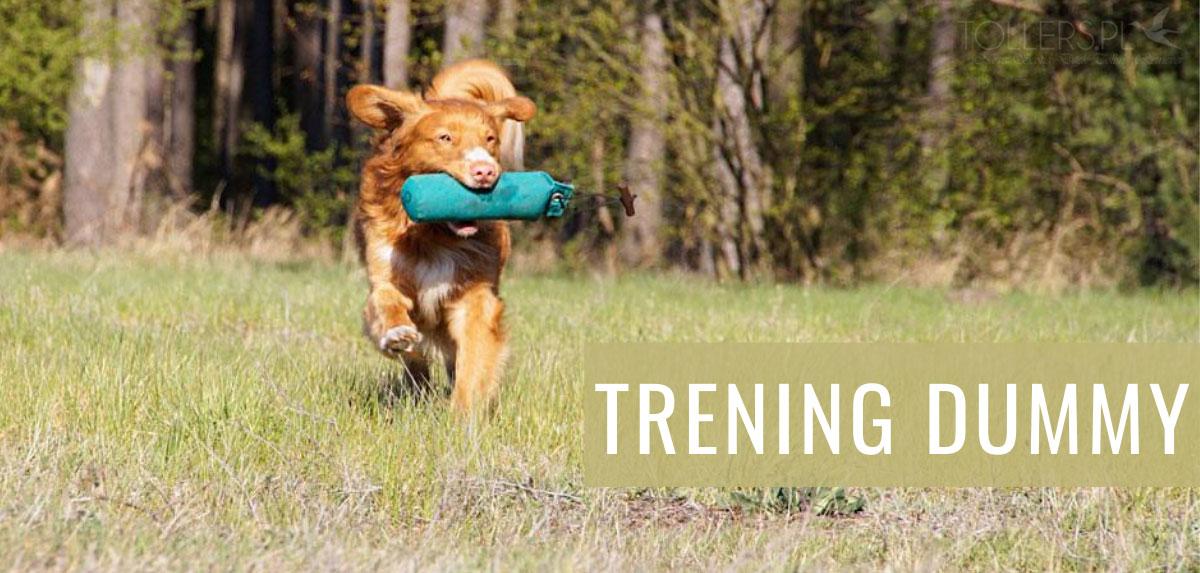 Trening dummy psa rasy Nova Scotia Duck Tolling Retriever
