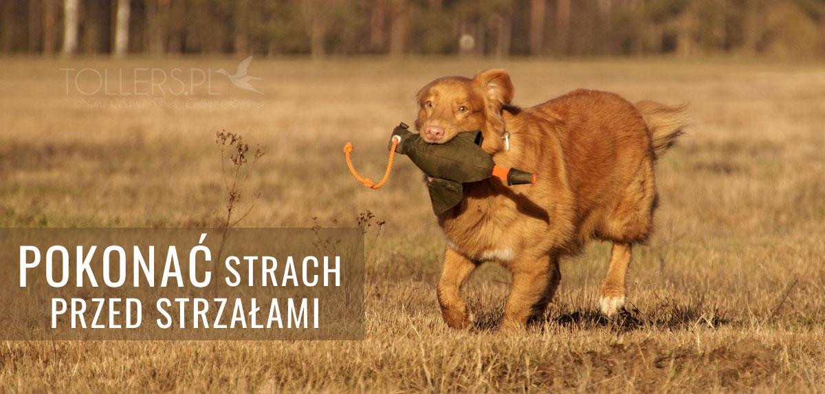 Sposób jak pokonać strach psa przed strzałami