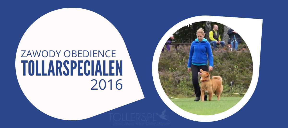 Toller na zawodach obedience w Szwecji