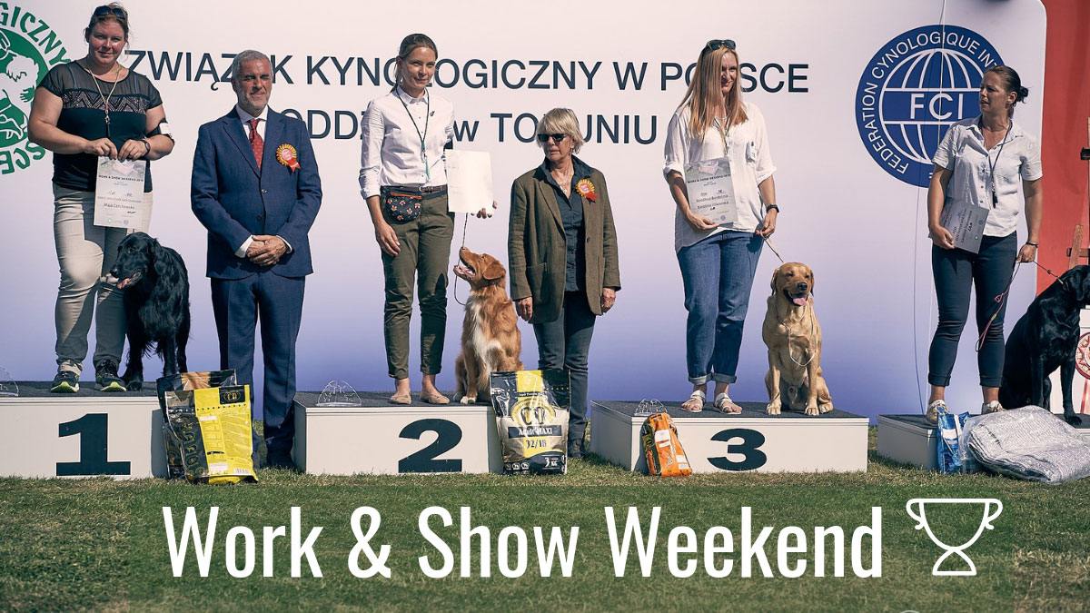 Work & Show retriever Weekend 2019
