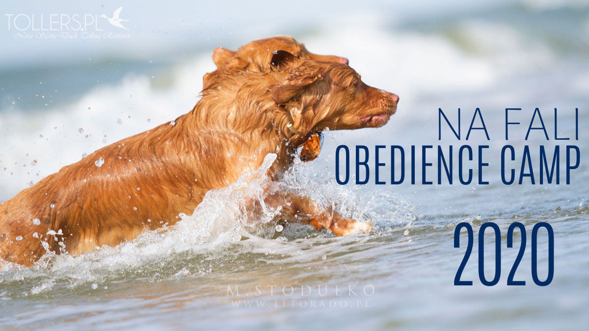 NA FALI Obedience Camp 2020