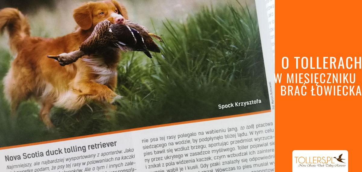 """Artykuł o rasie Nova Scotia Duck Tolling Retriever (Tollerach) w miesięczniku """"Brać Łowiecka"""""""
