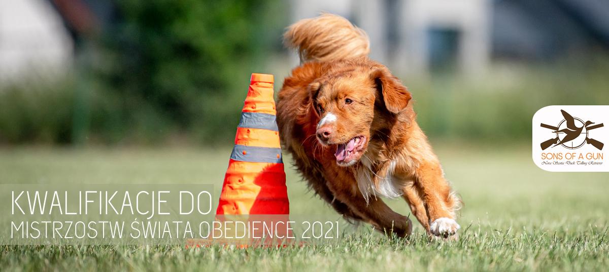 kwalifikacje obedience
