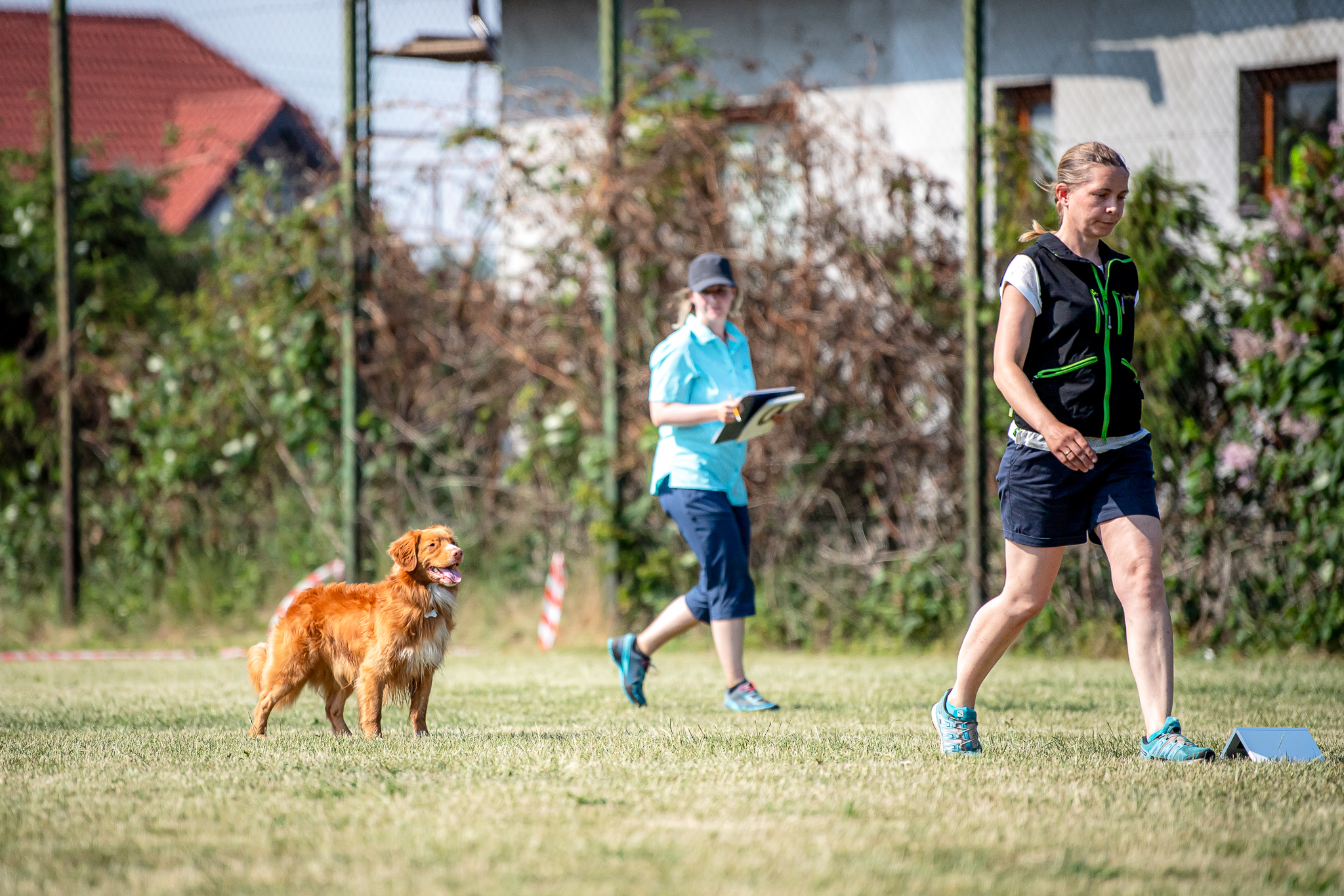Obedience with a Toller